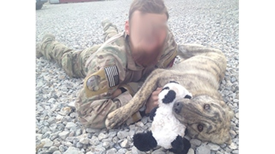 "A sergeant with a U.S. elite special forces unit is pictured with ""Rommel,"" one of the two dogs he rescued in Afghanistan. The sergeant, whose name is being withheld for security reasons, will be reunited with the dogs in North Carolina on July 23."