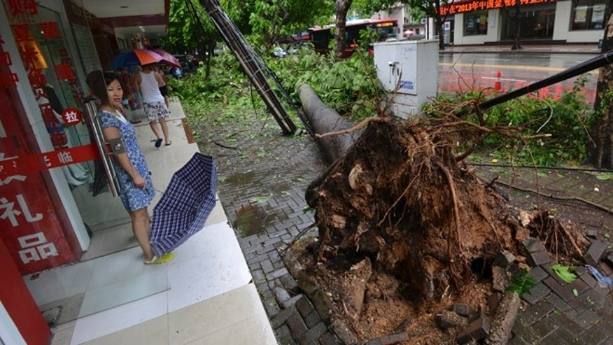 July 19, 2014: In this photo, a woman looks at a tree uprooted by Typhoon Rammasun in Nanning in south China's Guangxi Zhuang Autonomous Region. (AP)