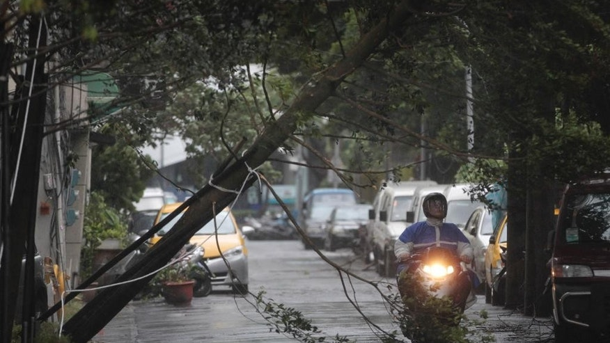 A motorcyclist passes under a fallen tree from strong winds of passing Typhoon Matmo in Taipei, Taiwan, Wednesday, July 23, 2014. The eye of Typhoon Matmo made landfall in eastern Taiwan early Wednesday bringing with it heavy rains and winds with gusts over 140 kilometers (85 miles) per hour. (AP Photo/Wally Santana)