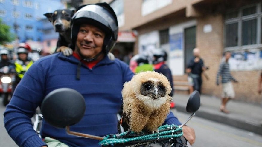 A man stops to pose for a portrait on his motorcycle, carrying his pet owl and dog, as he arrives to the area where Brazilian Socialist Party presidential candidate, Marina Silva, will campaign in the Rocinha slum in Rio de Janeiro Brazil, Saturday, Aug. 30, 2014. Brazil will hold its presidential election on Oct. 5. (AP Photo/Leo Correa)