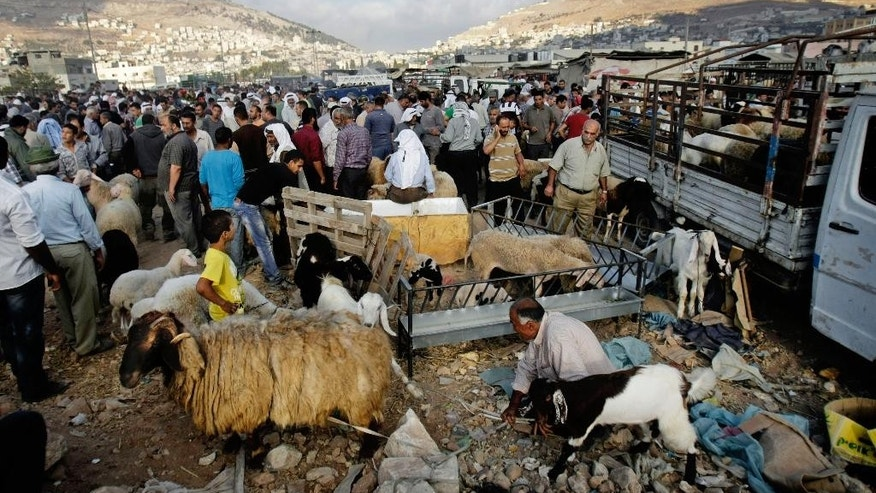 Palestinians sell animals at a livestock market in preparation for the Muslim holiday of Eid al-Adha in the West bank city of Nablus, Thursday, Oct. 2, 2014. Muslims around the world are preparing to mark Eid al-Adha, also called the Feast of the Sacrifice, as the biggest holiday of the Islamic calendar. The faithful slaughter sheep, cattle and other livestock, and give part of the meat to the poor. (AP Photo/Nasser Ishtayeh)