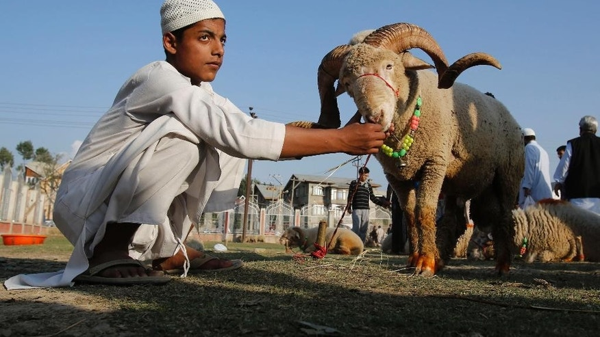 A young sheep vendor feeds a sheep as he awaits customers at a market ahead of the Muslim festival Eid al-Adha, in Srinagar, Indian-controlled Kashmir, Sunday, Oct.5, 2014.Muslims are marking the Eid al-Adha, that commemorates the willingness of the prophet Ibrahim to sacrifice his son in accordance with God's will, though in the end God provides him a sheep to sacrifice instead. On the start of Eid al-Adha, Muslims slaughter sheep, cattle and other livestock, and give part of the meat to the poor. (AP Photo/Mukhtar Khan)