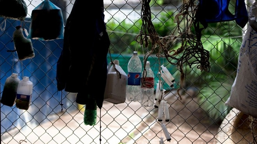 Aug. 26, 2014: Plastic bottles and syringes hang from a fence around a stable at La Rinconada racetrack in Caracas, Venezuela.