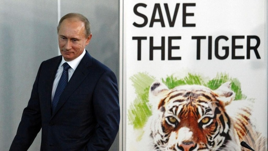 FILE - In this Nov. 23, 2010 file photo, then Russian Prime Minister Vladimir Putin attends the International Tiger Forum in St. Petersburg, Russia. A rare Siberian tiger released into the wild by Russian President Putin has strayed into China and may be in danger, state media said Thursday, Oct. 9, 2014. Russia informed Chinese forestry officials that the tiger, tagged with a tracking device, was observed in a nature preserve in northeastern China's Heilongjiang province, China's Xinhua News Agency reported.  (AP Photo/Dmitry Lovetsky, File)