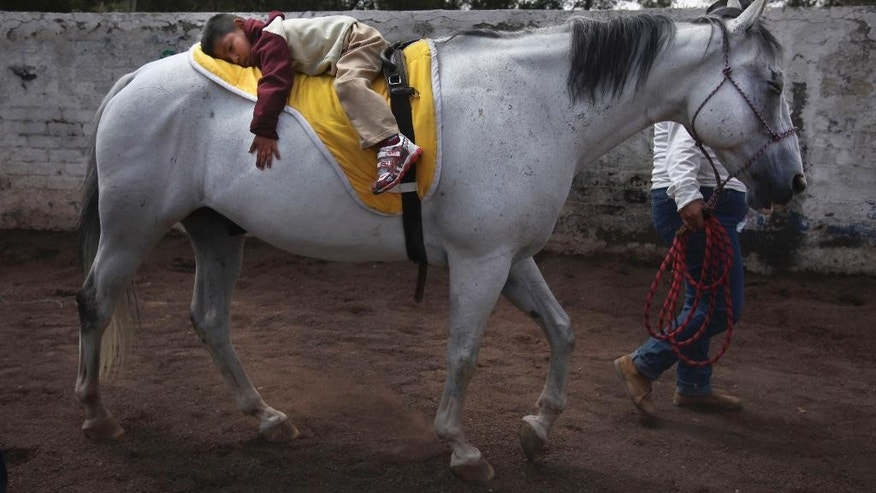 """In this Aug. 26, 2014 photo, 4-year-old patient Saul Valverde rides lying on the back of Andariego, a 19-year-old veteran horse retired from """"charreria,"""" the Mexican version of a rodeo, at a corral in southern Mexico City. Andariego now works as a therapy horse, helping children with special needs. Horses can live another 20 years after their rodeo days. The lucky ones find second careers in breeding or as therapy horses. (AP Photo/Marco Ugarte)"""