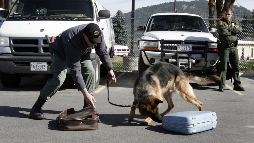 COLVILLE, WA - MAY 9:  U.S. Border Patrol Agent Chad Hickman (R) watches as agent Shannon Clift (L) works his German shepherd, Cliff, during a drug detection training session May 9, 2006 in the mountains north of Colville, Washington. The U.S. Department of Homeland Security is increasing security along 300 miles of the nation's most remote sector of the U. S.-Canadian border that covers eastern Washington, northern Idaho, and western Montana by sending 14 specially trained K9 units to assist the efforts of the U.S. Border Patrol and U.S Customs agents. The Spokane sector of the international border has 87,500 square miles of rugged mountain and backcountry terrain, making it a prime target for smugglers across the border both ways. The specialized dogs come from Europe and are used for detecting concealed humans and drug contraband.  (Photo by Jeff T. Green/Getty Images)
