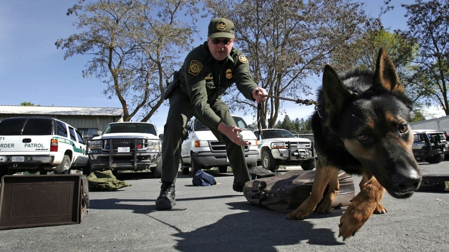 COLVILLE, WA - MAY 9:  U.S. Border Patrol Agent Sean Huntsman works his German shepherd, Birt, during a drug detection training session May 9, 2006 in the mountains north of Colville, Washington. The U.S. Department of Homeland Security is increasing security along 300 miles of the nation's most remote sector of the U. S.-Canadian border that covers eastern Washington, northern Idaho, and western Montana by sending 14 specially trained K9 units to assist the efforts of the U.S. Border Patrol and U.S Customs agents. The Spokane sector of the international border has 87,500 square miles of rugged mountain and backcountry terrain, making it a prime target for smugglers across the border both ways. The specialized dogs come from Europe and are used for detecting concealed humans and drug contraband.  (Photo by Jeff T. Green/Getty Images)