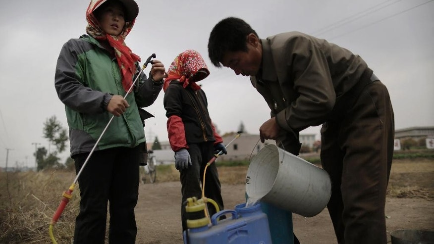 Farmers refill their tanks with fertilizer to be sprayed on cabbage crops which will be harvested early next month and used to make Kimchi at the Chilgol vegetable farm on the outskirts of Pyongyang, North Korea, Friday, Oct. 24, 2014. It looks like the residents of Pyongyang won't be lacking for cabbage and vegetables come next month, when the crops will be harvested. Providing enough food to feed the nation is always a struggle for North Korea, which suffered a near cataclysmic famine in the 1990s but has since managed to increase its agricultural production to what international organizations believe is closer to the self-sufficiency level than the country has seen in years. (AP Photo/Wong Maye-E)