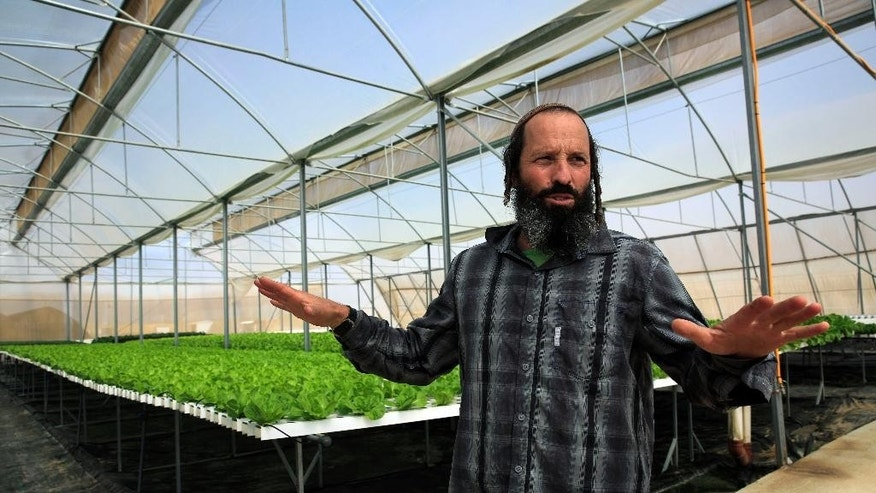 "In this Sunday, Oct. 19, 2014 photo,  Gilad Fine, a religious Jewish farmer from Bnei Netzarim stands inside his greenhouse, between the southern tip of the Gaza Strip and the Egyptian border. Fine grows lettuce and kale using hydroponics on raised platforms to fulfill the biblical commandment to let his farmlands rest every seventh year. His greenhouse follows specific guidelines that certify the produce kosher for the sabbatical year called ""shmita"" in Hebrew, that began last month on the Jewish New Year, and extends through the fall of 2015. (AP Photo/Tsafrir Abayov)"