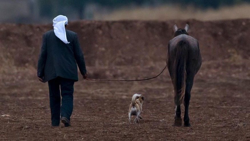 A man walks along with a horse and dog near a staging area where Iraqi Kurdish peshmerga fighters are stationed on the outskirts of Suruc, near the Turkey-Syria border, across from the Syrian town of Kobani, Thursday, Oct. 30, 2014. Ten Iraqi peshmerga fighters entered the northern Syrian border town of Kobani, also known as Ayn Arab, crossing over from Turkey on Thursday, the first from among a group of 150 Kurdish troops on their way into the embattled city. (AP Photo/Vadim Ghirda)