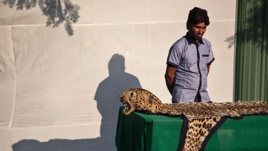 A zoo worker stands beside a tiger skin displayed before authorities set fire to a stockpile of illegal wildlife parts at the Delhi Zoo in New Delhi, India, Sunday, Nov. 2, 2014. A stockpile of tiger skins, elephant tusks, rhino horns and other illegal animal parts were burned Sunday in an effort to discourage wildlife smuggling in South Asia. (AP Photo/Tsering Topgyal)