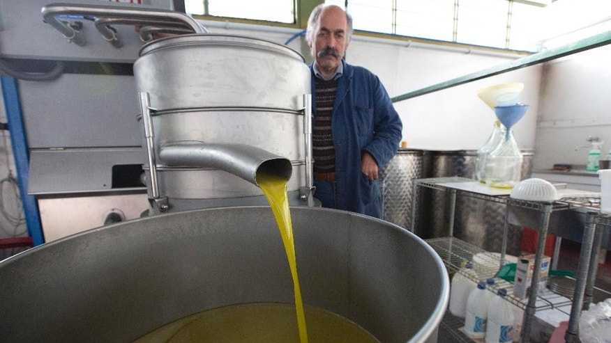 In this Thursday, Nov. 13, 2014  photo, Augusto Spagnoli, oil producer, shows how his oil mill works, during an interview with The Associated Press, in Nerola, 50 kilometers (31 miles) from Rome. Italy's 2014 olive harvest was declared by both producers and experts as the worst in history, due to adverse climatic conditions which helped the olive fly proliferate thus destroying the olives before they could be harvested. (AP Photo/Alessandra Tarantino)