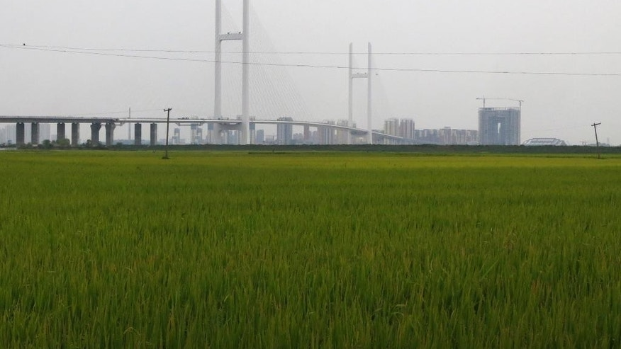 This Sept. 2, 2014 photo shows a new bridge connecting North Korea and China, seen from the North Korean side of the Yalu River border, where it touches down in rice fields in Sinuiju. The bridge was supposed to be a key link for trade and travel between China's underdeveloped northeast provinces and a much-touted special economic zone in North Korea - so key that Beijing sank more than 350 million dollars into the mammoth, 3-kilometer-long structure that was slated to open late last month. Now, it is beginning to look like Beijing has built a bridge to nowhere. (AP Photo)