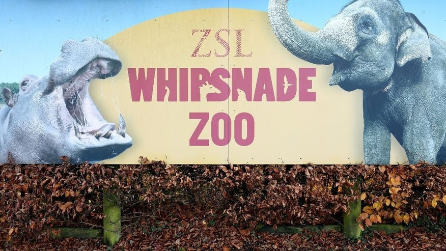 A general view of the entrance to Whipsnade zoo in Bedfordshire, England, Wednesday Nov. 19, 2014. A keeper at Britain's largest zoo has been seriously injured in an incident involving a rhino. Whipsnade Zoo in Bedfordshire, north of London, says emergency services were called after one of its keepers was injured Wednesday morning. Ambulance officials say the man, in his 50s, received injuries to the chest, abdomen and pelvis, and that he was rushed to a hospital. The zoo says it's investigating what happened during the incident, which took place in an enclosure where five one-horned rhinos are kept.  (AP Photo/PA, Chris Radburn) UNITED KINGDOM OUT