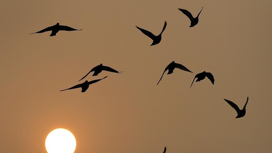 Birds fly as the sun sets through haze in Beijing Wednesday, Nov. 19, 2014. Chinese officials have imposed energy consumption caps for 2020 aimed at making the country less dependent on coal. Under the State Council's development plan issued Wednesday, the allowable growth by 2020 in energy consumption would be 28 percent of the 2013 level. For coal, growth would be limited to 16 percent of the 2013 level. (AP Photo/Andy Wong)
