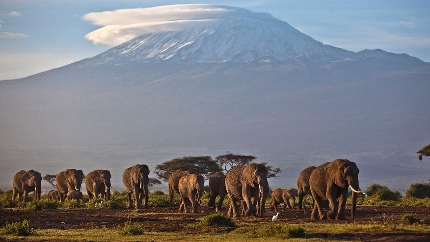 FILE - In this Monday, Dec. 17, 2012 file photo, a herd of adult and baby elephants walks in the dawn light as the highest mountain in Africa Mount Kilimanjaro in Tanzania is seen in the background, in Amboseli National Park, southern Kenya. Warlord Joseph Kony's Lord's Resistance Army rebel group is increasingly trafficking in ivory and minerals to obtain weapons and other supplies to be used in the jungles of central Africa, watchdog groups said in a report released Wednesday, Nov. 19, 2014. (AP Photo/Ben Curtis, File)