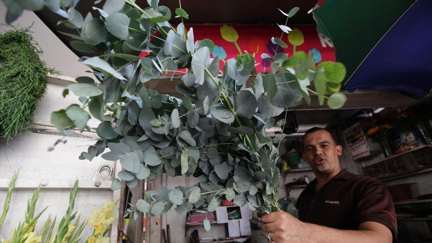 A flower seller shows a eucalyptus stalks in Caracas, Venezuela, Wednesday, Nov. 19, 2014. In Venezuela people now burn eucalyptus as a method of keeping the bugs away now that DEET is all but extinct there. (AP Photo/Ariana Cubillos)