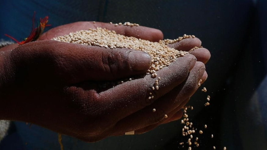 """In this Nov. 7, 2014 photo, a man holds Peruvian quinoa, part of 23 metric tons to be burned in Guaqui, Bolivia. International demand for quinoa continues to boom, and that's fueling an increasingly bitter commercial feud between Bolivia and Peru, the two main producers of the Andean """"superfood."""" As Peru boosts production of cheaper factory-farmed quinoa, the grain is increasingly being smuggled into landlocked Bolivia to be mixed with, and sometimes sold as, organic quinoa _ Bolivia's specialty, growers and government officials say. (AP Photo/Juan Karita)"""