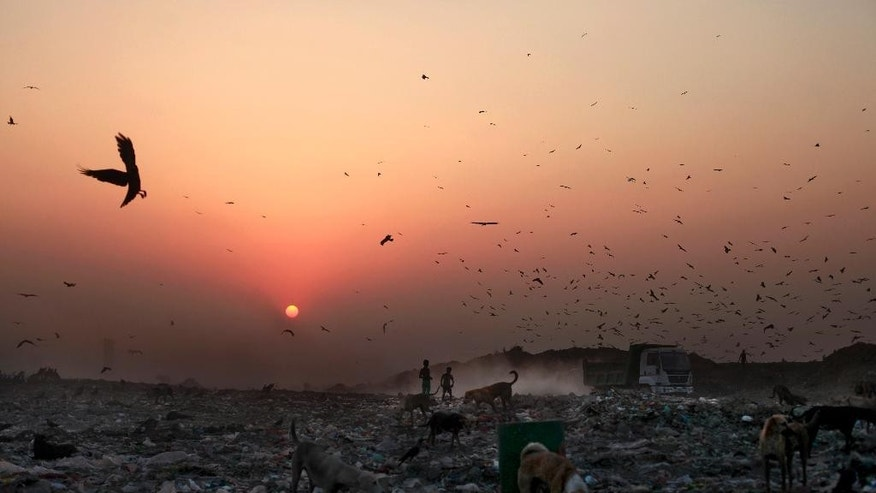 In this Oct. 17, 2014 photo, young waste pickers look for recyclable items at a landfill as the sun sets on the outskirts of New Delhi, India. Rag picking is effectively the primary recycling system in India. While the rag pickers offer invaluable services to the city, they have few rights and are exposed to deadly poisons everyday. (AP Photo/Altaf Qadri)