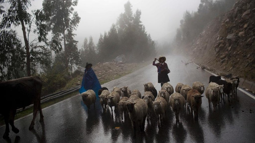 Women herd their sheep to their village in Huaraz, Peru, Wednesday, Dec. 3, 2014. Peru's glaciers have lost more one-fifth of their mass in just three decades, and the 70 percent Peru's 30 million people who inhabit the country's Pacific coastal desert, depend on glacial runoff for hydropower and to irrigate crops, meaning their electricity and long-term food security could also be in peril. Higher alpine temperatures are killing off plant and animal species in cloud forests and scientists predict Pacific fisheries will suffer. (AP Photo/Rodrigo Abd)