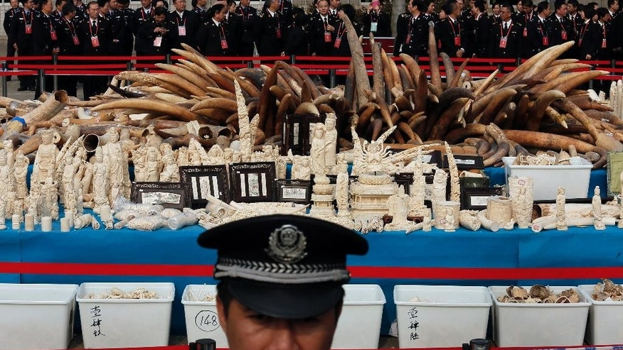 FILE - In this Monday, Jan. 6, 2014 file photo, a customs officer stands guard in front of confiscated ivory before its destruction in Dongguan, southern Guangdong province, China. Street prices for illegal ivory are soaring in China, where newly wealthy middle and upper class citizens are buying carved ivory and whole tusks as a status symbol of their riches, a report released Tuesday, Dec. 9, 2014 found. (AP Photo/Vincent Yu, File)