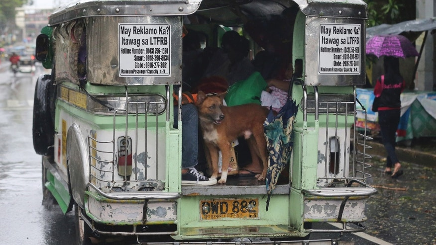 Dec. 9, 2014: A dog stands inside a jeepney loaded with people returning back to their homes from an evacuation center after Typhoon Hagupit crossed Batangas province.