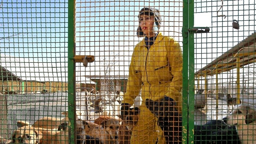 In this Friday, Dec. 5, 2014 photo, Iranian volunteer Rana Ashoug stands inside a cage with dogs at the Vafa Animal Shelter in the city of Hashtgerd 43 miles (73 kilometers) west of the capital Tehran, Iran. Man's best friend is seen as anything but in Iran, where city workers gun down strays and conservatives view pet dogs as a corrupting Western influence. But in a rare animal shelter in the countryside west of Tehran, hundreds of lucky pups have found mercy, and a growing number of Iranians are learning to love them. (AP Photo/Vahid Salemi)