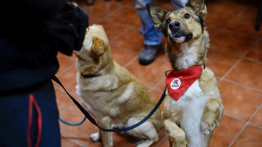 FILE - In this Wednesday, Dec. 10, 2014 file photo, Mulan, a 4-year-old stray dog, sits on her hind legs asking for a treat, in Bucharest, Romania. Bucharest's thousands of strays have had a bad rap. They fatally mauled three people in recent years and the latest death of a four-year-old boy in 2013 led to a law that orders strays euthanized unless they find a home. (AP Photo/Octav Ganea, Mediafax, File) ROMANIA OUT