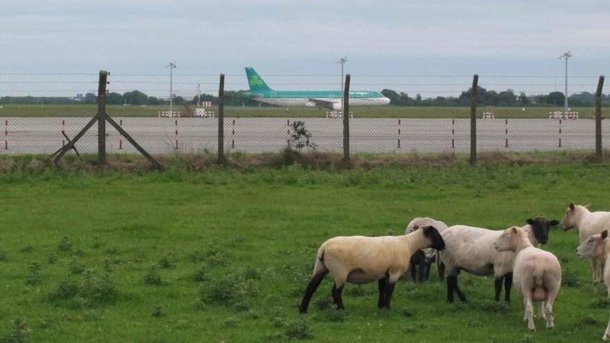 FILE - In this Wednesday June 20, 2012 file photo a flock of sheep stand in a field as two Aer Lingus jets taxi and take off at Dublin Airport, Ireland. Aer Lingus announced Monday Jan. 26, 2015 that British Airways parent IAG has made an improved takeover offer of 2.55 euros ($2.85) per share, and the board of the Irish airline says it is considering the proposal. (AP Photo/Shawn Pogatchnik, File)