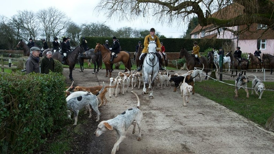 "In this photo taken Tuesday, Feb. 10, 2015, Gerald Sumner huntsman and master of the hounds of Kimblewick Hunt, leads off the hunt in Ibstone, England. A decade ago, Britain banned fox hunting with hounds, a centuries-old blood sport with deep roots in the countryside and strong opponents in the towns. Animal-welfare groups cheered the end of what they considered a cruel pastime reserved for the rich _ a sport Oscar Wilde dubbed ""the unspeakable in full pursuit of the uneatable.""(AP Photo/Alastair Grant)"