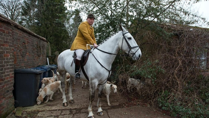 "In this photo taken Tuesday, Feb. 10, 2015, Gerald Sumner huntsman and master of the hounds of Kimblewick Hunt, waits with his dogs in Ibstone, England. A decade ago, Britain banned fox hunting with hounds, a centuries-old blood sport with deep roots in the countryside and strong opponents in the towns. Animal-welfare groups cheered the end of what they considered a cruel pastime reserved for the rich _ a sport Oscar Wilde dubbed ""the unspeakable in full pursuit of the uneatable.""(AP Photo/Alastair Grant)"