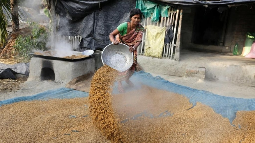 In this Jan. 31, 2015 photo, a village woman spreads boiled paddy to dry outside her house at Dulki village in the Sundarbans, India. For some 13 million impoverished villagers living precariously on the river deltas that spill into the Bay of Bengal, global warming is already a reality. Each year, with crude tools and bare hands they build mud embankments to keep the saltwater and wild animals from invading their crops. And each year swollen rivers, monsoon rains and floods wash many of those banks and mud-packed homes back into the sea. (AP Photo/Bikas Das)