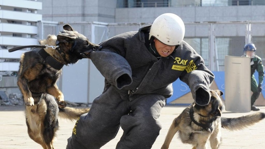 In this Feb. 19, 2015 photo, police dogs bite the arm of a police officer during an anti-terrorism drill for the upcoming Tokyo Marathon, at the Tokyo Metropolitan Police headquarters in Tokyo. Organizers of the Feb. 22 marathon have promised increased security following the slaying of two Japanese hostages by the Islamic State group. (AP Photo/Kyodo News) JAPAN OUT, CREDIT MANDATORY