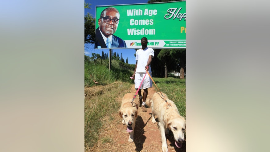 In this photo taken Friday, Feb. 20, 2015, a man walks his dogs beneath a year-old billboard from last year wishing Zimbabwean President Robert Mugabe a happy 90th birthday in Harare. Mugabe marks his 91st birthday Saturday Feb, 21, 2015, with his supporters saying they will back him to run his full term until 2018 and beyond despite nagging questions about his health and an economy that is crumbling under his watch. (AP Photo/Tsvangirayi Mukwazhi)