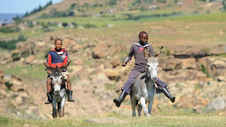 Boys ride on donkeys near Maseru, Lesotho, Sunday March 1 2015, as the country awaits the results of elections held Saturday. The southern African nation held an early election aimed at overcoming tension among political factions that has led to violence among security forces since last year. (AP Photo)