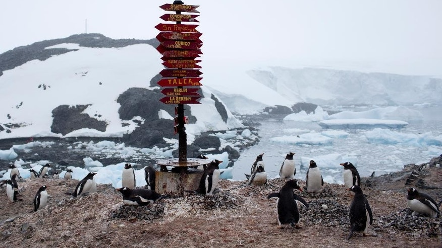 "In this Jan. 22, 2015 photo, Gentoo penguins gather near a post of wooden arrows with names of cities and their respective distances, at the Bernardo O'Higgins scientific station, Antarctica. Increasing foot traffic poses ""particular risks of disturbance or contamination to some of the last remaining essentially pristine areas on the planet,"" said Alan Hemmings, an environmental consultant on polar regions. ""We should not passively watch Antarctica being turned into a theme park."" (AP Photo/Natacha Pisarenko)"
