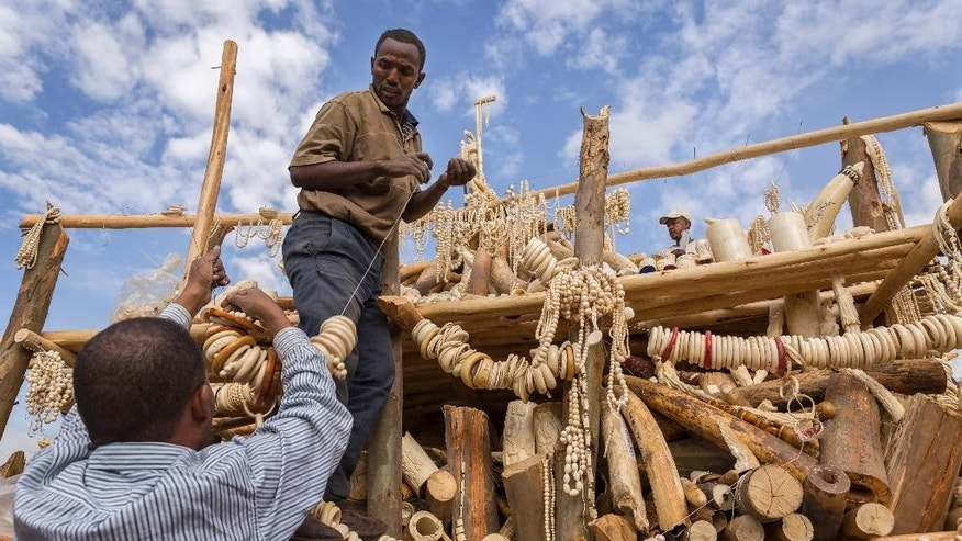 Ethiopian authorities assemble a pile of 6.1 tons of illegal elephant tusks, ivory trinkets, carvings and various forms of jewelry to be burned on a wooden pyre that government officials set alight to discourage poaching and the ivory trade, in the capital Addis Ababa, Ethiopia Friday, March 20, 2015. Ethiopia became the second African country this year to burn its ivory stockpile as global efforts increase for the conservation of elephants, a vulnerable species whose numbers are quickly dwindling as they are killed for their ivory tusks. (AP Photo/Mulugeta Ayene)