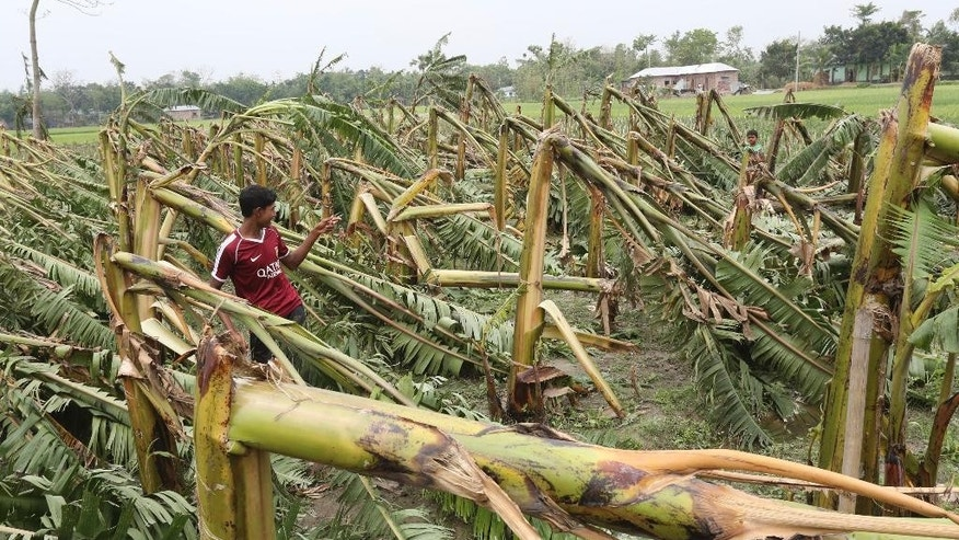 In this Sunday, April 5, 2015 photo, Bangladeshi boys stand amid damaged banana plantations after tropical storms in Gabtoli area, in northern Bogra district, Bangladesh. Separate tropical storms that have swept through parts of Bangladesh have left dozens of people dead and scores injured. (AP Photo/Shafiq Islam)