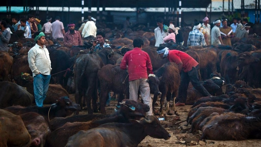 In this April 2, 2015 photo, traders buy and sell buffaloes at Ghazipur slaughterhouse complex in New Delhi, India. India is the world's second-largest exporter of beef, but with the victory of Prime Minister Narendra Modi's Hindu nationalist Bharatiya Janata Party last year, the industry is facing tougher bans on slaughter. (AP Photo/Saurabh Das)