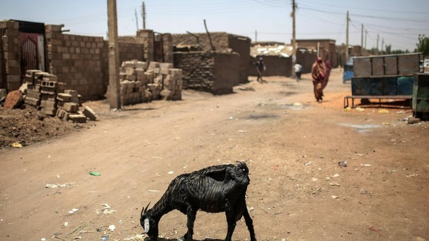 In this picture taken on Tuesday, April 14, 2015, a goat grazes on rubbish in a street in Izba, an impoverished neighborhood on the outskirts of Khartoum, Sudan. Izba is one sign of how the constant internal wars, under Sudan's President Omar al-Bashir, have shaped, Khartoum. Before al-Bashir came to power, Izba was home to a community of Arab tribesmen who had settled here to be close to the capital. But through the 1990s and 2000s, it swelled with Sudanese fleeing war zones around the country. Now 70,000 people live crammed into Izba, an area of about a square mile. (AP Photo/Mosa'ab Elshamy)