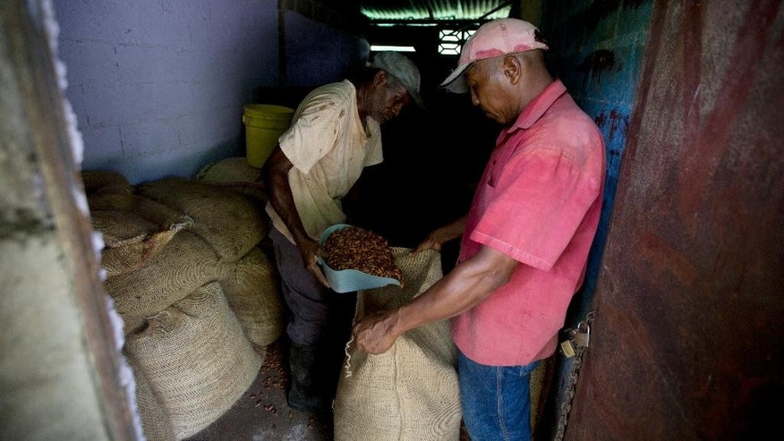 In this April 16, 2015 photo, workers bag dry cacao beans at the Agropampatar chocolate farm Co-op in El Clavo, Venezuela. For centuries, Venezuela was among the world's biggest cacao producers, though the industry stagnated decades ago as oil came to dominate the economy. (AP Photo/Fernando Llano)