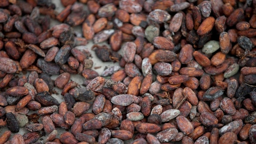 In this April 16, 2015 photo, cacao beans dry under sun at the Agropampatar chocolate farm Co-op in El Clavo, Venezuela. Today the country exports just 8,000 tons of cacao a year, for revenue of about $30 million, slightly less than it earns from exporting another signature product, rum. (AP Photo/Fernando Llano)