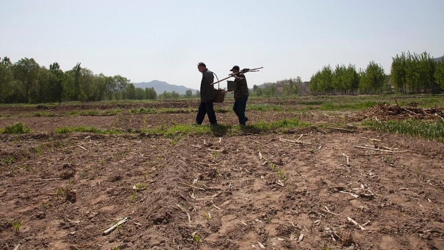 In this April 23, 2015 photo, friends Jia Wenqi, left, and Jia Haixia walk across a field in Yeli village near Shijiazhuang city in northern China's Hebei province. For the past 13 years, Jia Wenqi, who has no arms, and Jia Haixia, who is blind, have worked together to plant and water more than 12,000 trees near their village. (AP Photo/Helene Franchineau)