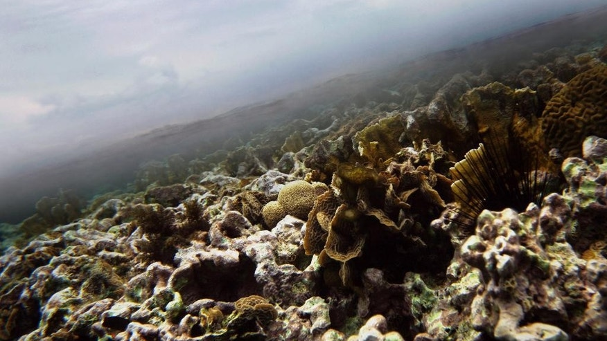 "FILE - This March 2009 file photo, shows coral underwater where a thin line of clear Caribbean ocean separates it from the clouds near the second largest barrier reef that runs along the coast of Belize. Belize is considering new offshore drilling regulations that could open up nearly the entire coast to exploration and exploitation, environmental groups have warned, calling it a threat to vital reefs, fisheries and tourism concerns. Belize currently has a moratorium on offshore drilling. ""They've declared open-season on almost 99 percent of Belize's marine area,"" Janelle Chanona, Oceana's vice president for the Central American nation, said on Thursday, May 7, 2015 from the capital, Belmopan. (AP Photo/Pat Wellenbach, File)"
