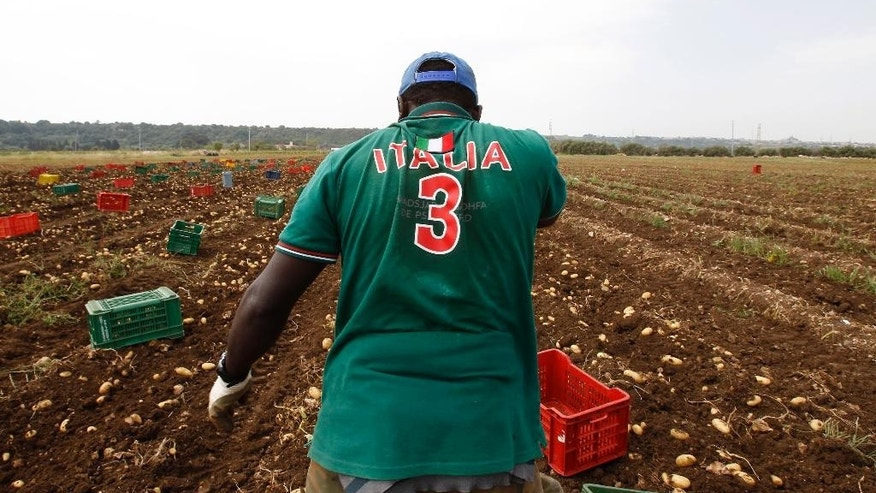 A migrant pauses as he picks potatoes, in Siracusa, Sicily, southern Italy, Thursday, May 7, 2015. Colorful plastic boxes lie evenly spaced on a freshly turned field, ready to be filled with potatoes destined for the plates of diners across Europe. The 14 men lining up to pluck them from the rich soil of eastern Sicily are almost all newcomers to a continent where many eye them with a mix of pity and suspicion. The desperate quests of record numbers of migrants to cross the Mediterranean and reach Europe have been well-documented. But few know that those who make it here often spend years trapped in an immigration limbo where the only way to make money is to do the back-breaking farm labor that locals shun _ but which is critical to feeding the continent. (AP Photo/Antonio Calanni)