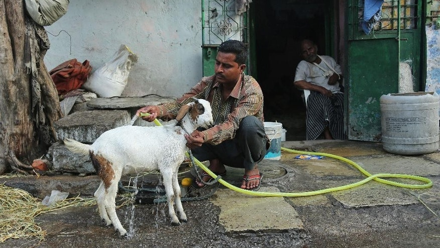 An Indian man uses a hose to bathe his goat to provide relief from the heat in Hyderabad, in the southern Indian state of Telangana, Saturday, May 23, 2015. About 230 people have died since mid-April in a heat wave sweeping Andhra Pradesh and Telangana states, officials said Saturday. Day temperatures in Telangana's Khammam district soared to more than 48 degrees Celsius (118 Fahrenheit) on Saturday. (AP Photo/Mahesh Kumar A.)