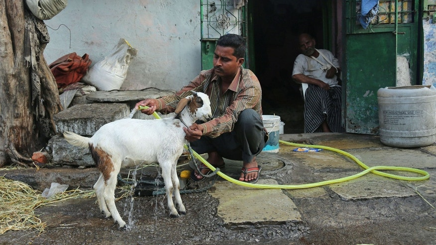 May 23, 2015: An Indian man uses a hose to bathe his goat to provide relief from the heat in Hyderabad, in the southern Indian state of Telangana.