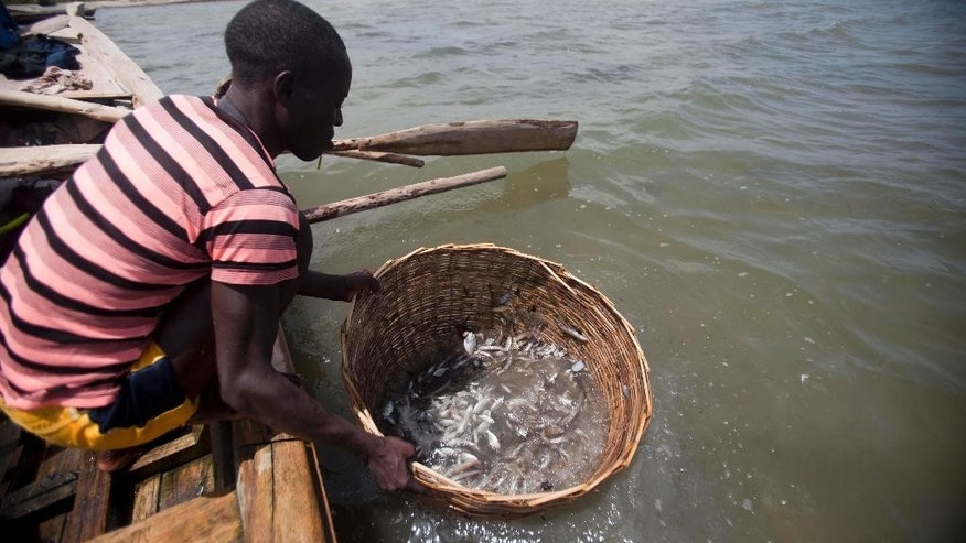 In this May 14, 2015 photo, a fishermen cleans fish in the waters of Caracol Bay before selling it to fish vendors near Cap Haitien, Haiti. Fishermen who want a catch big enough for a meal say they must travel three hours in a boat to the Dominican Republic, where they scour the reefs of a national park and risk arrest, beatings or even death. (AP Photo/Dieu Nalio Chery)
