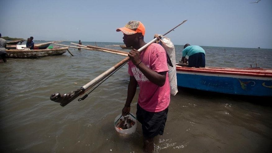 In this May 14, 2015 photo, fisherman Wilfrid Desarme, 30, carries a fishing spear and a bucket of fish after a day's work at Caracol Bay near Cap Haitien, Haiti. Desarme says he used to fish on Haiti's border with the Dominican Republic, but that he was run off by Dominican soldiers who beat him and even shot at him as he ran away, leaving his boat behind. He eventually got a new boat, and still takes the risk of fishing in Dominican waters, because he says there's not fish on the Haiti side. (AP Photo/Dieu Nalio Chery)