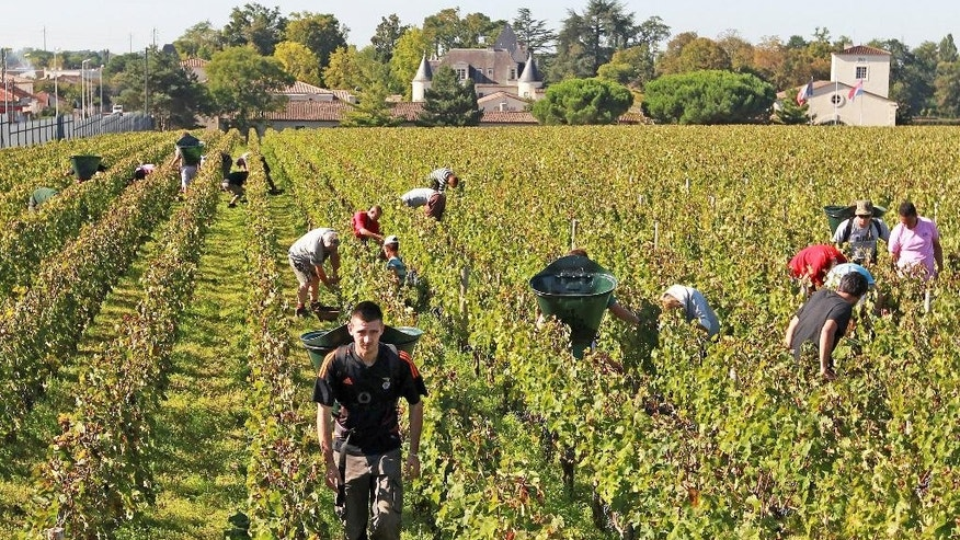 FILE - This Oct. 7, 2013 file photo shows workers collecting red grapes in the vineyards of the famed Chateau Haut Brion, a Premier Grand Cru des Graves, during the grape harvest season, in Pessac-Leognan, near Bordeaux, southwestern France. France wants to boost tourism by developing wine and gastronomy tours in its countryside as part of a series of measures that aim at keeping the country's position as the top destination in the world. French foreign affairs minister Laurent Fabius set Thursday a target of 100 million foreign tourists per year by 2020 _from 84 million now. (AP Photo/Bob Edme, File)